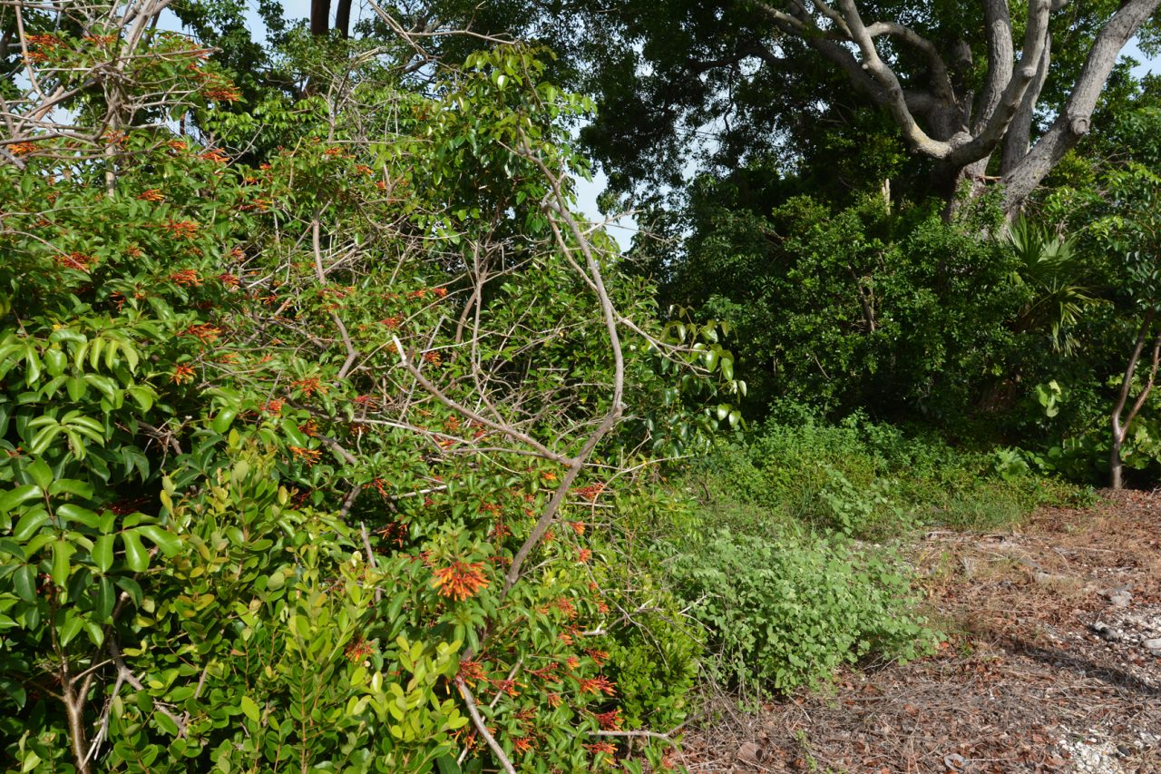 Plantation Hammocks Preserve
