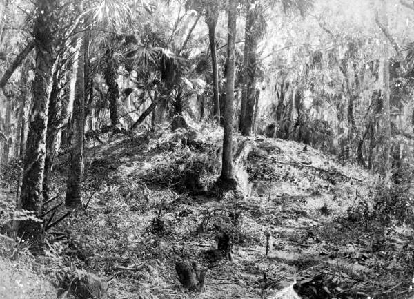 Indian mound 1890s De Leon Springs