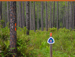 Florida Trail Updates
