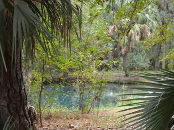 Mud Spring in Welaka State Forest