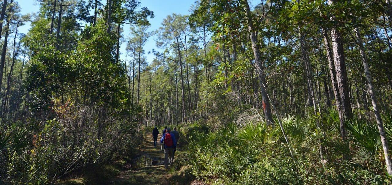 Welaka State Forest