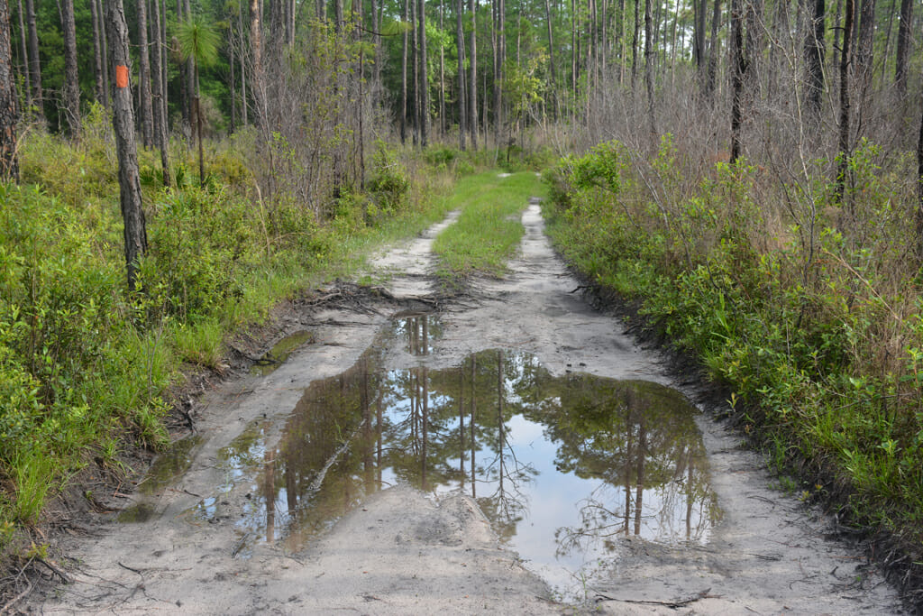 Florida Trail Porter Lake