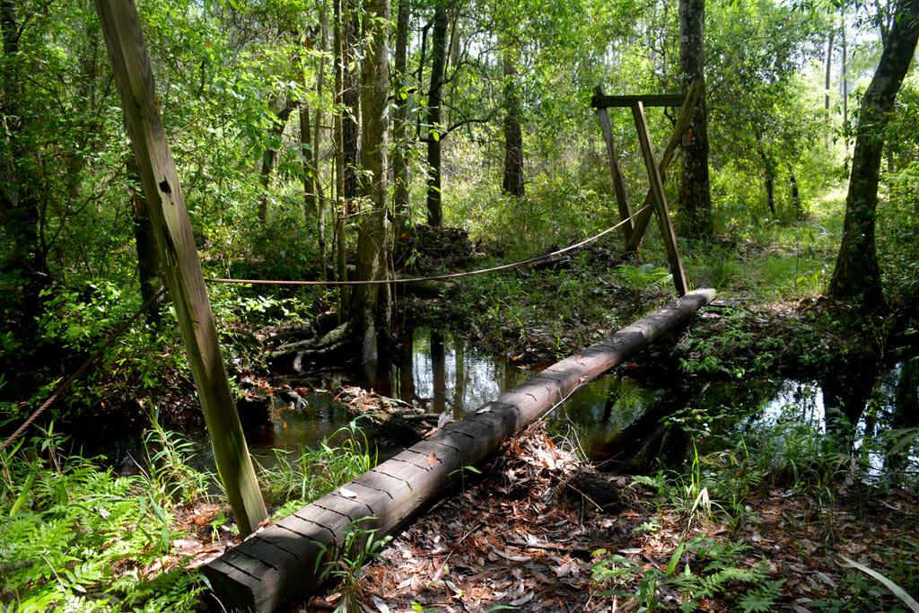 Florida Trail at Cox Branch