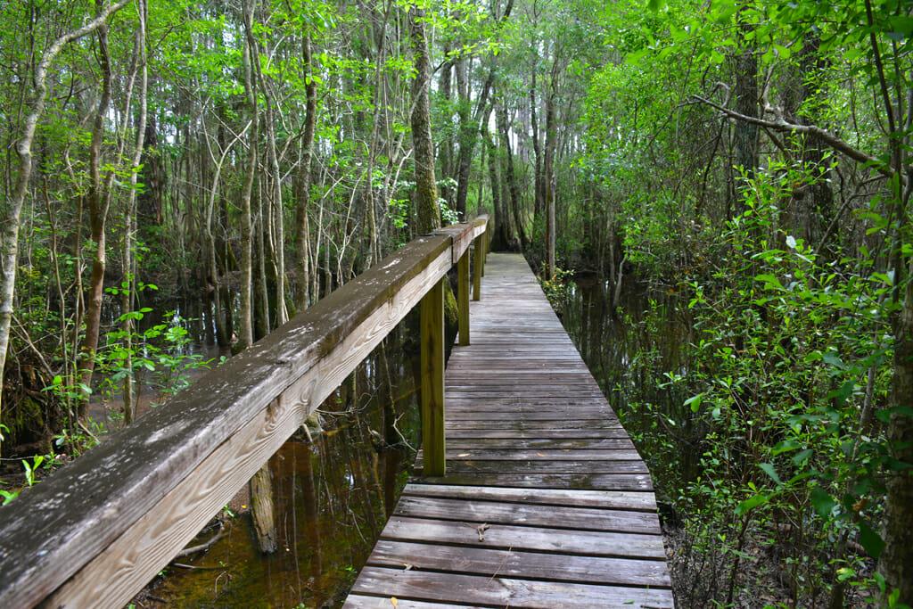 Florida Trail, Little Gully Creek