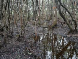 Florida Trail, Apalachicola
