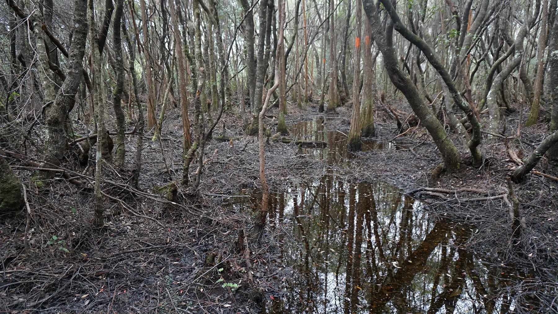 Florida Trail Jewel to Vilas