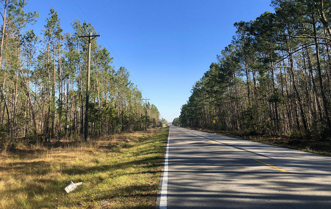 CR 12 in the Apalachicola National Forest
