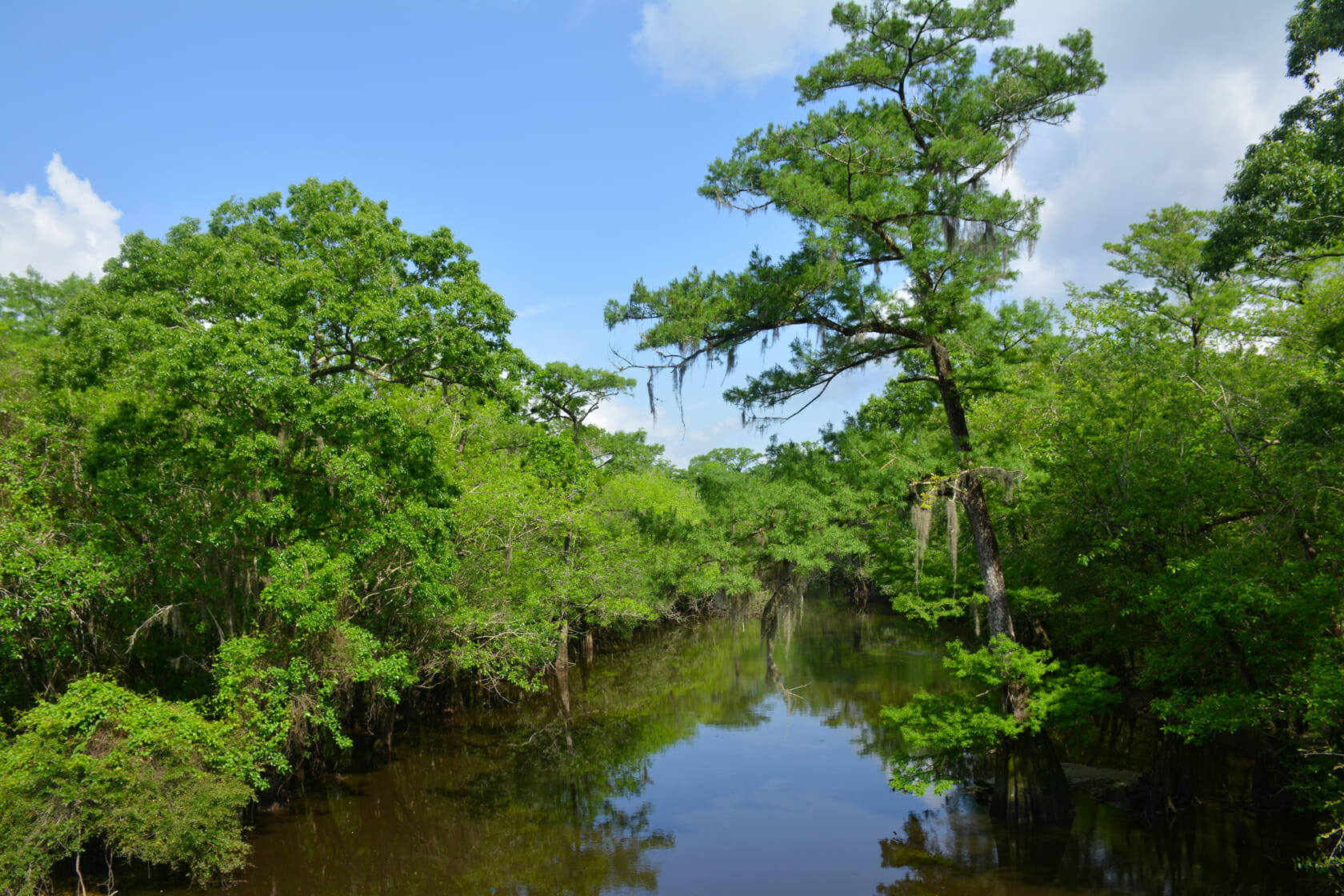 Ochlockonee River near Porter Lake