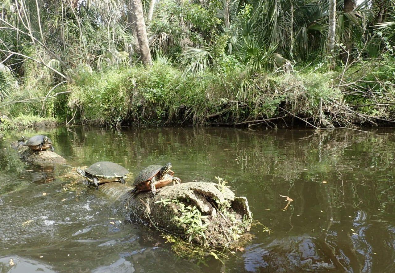 Paddling Turkey Creek
