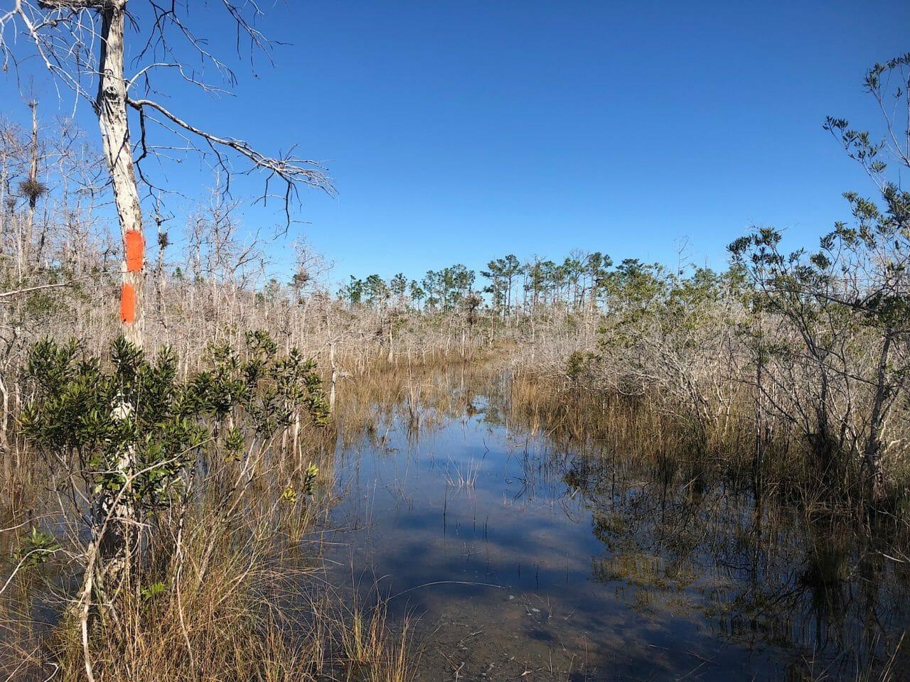 Big Cypress Swamp