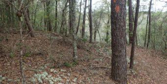 Eglin Weaver Creek