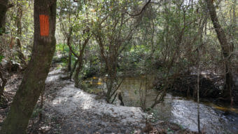 Lafayette Creek, Nokuse
