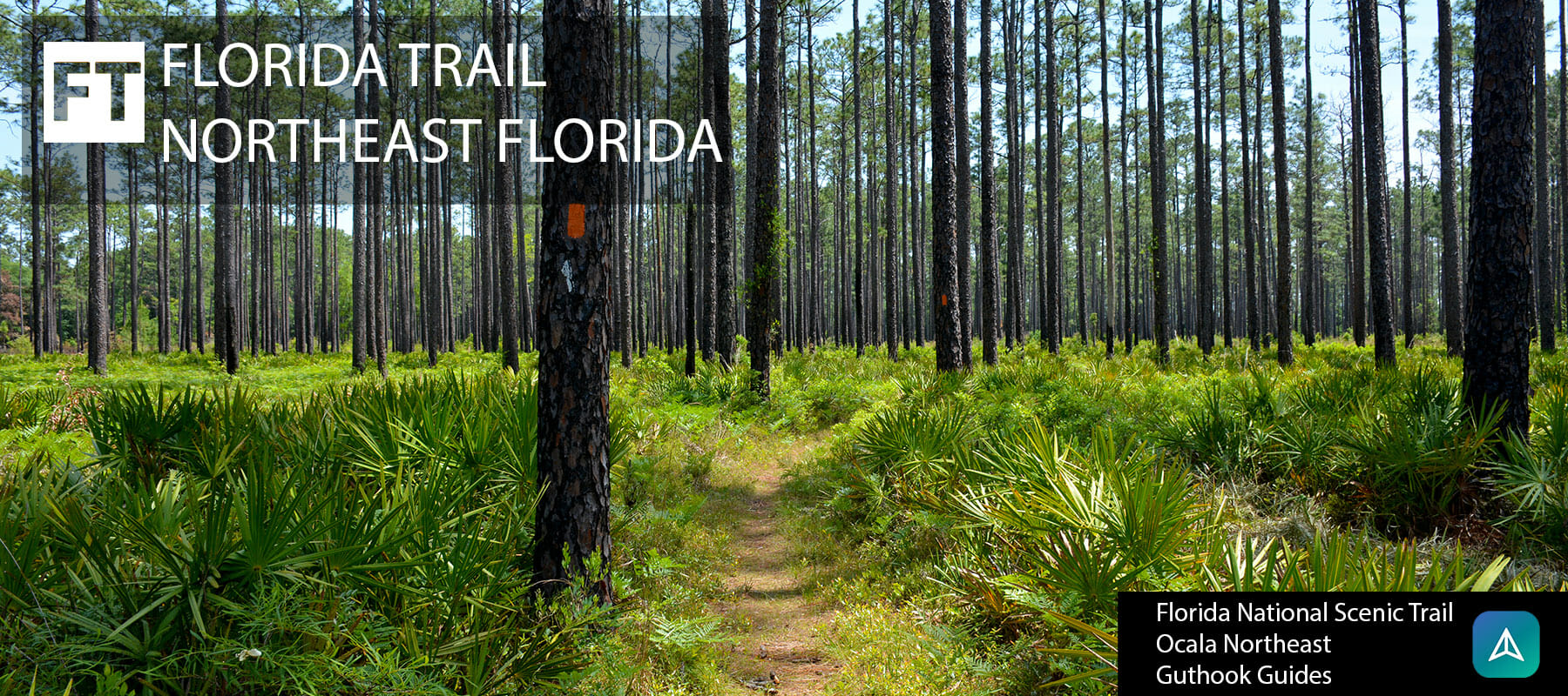 Florida Trail, Northeast Florida