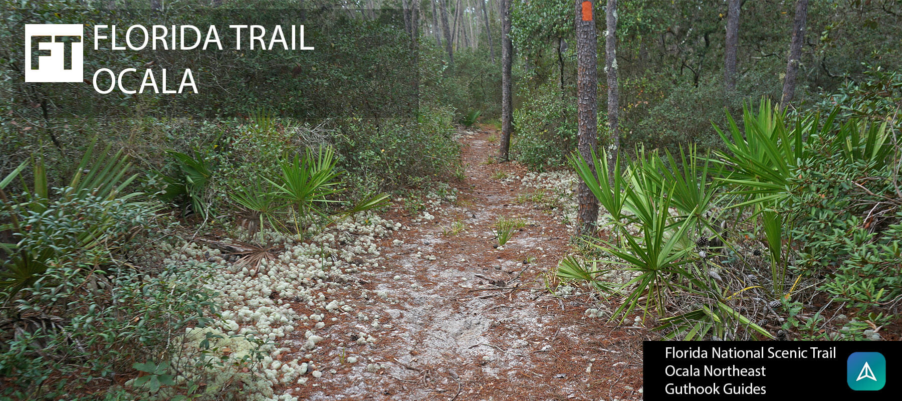 Florida Trail, Ocala