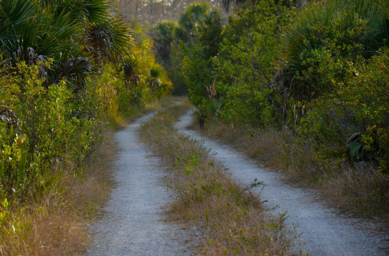 Nobles Grade, Big Cypress National Preserve