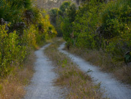 Florida Trail, Big Cypress North