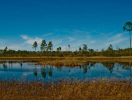 Florida Trail, Juniper Springs to Hopkins Prairie