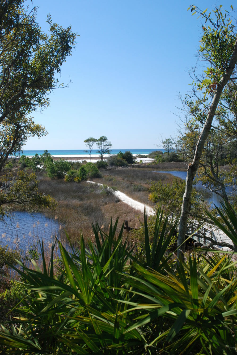 Best known for its beaches, bike paths, and barrier island parks, Panama City Beach is also a launch point for backpacking and day hikes in extensive natural lands to its north.