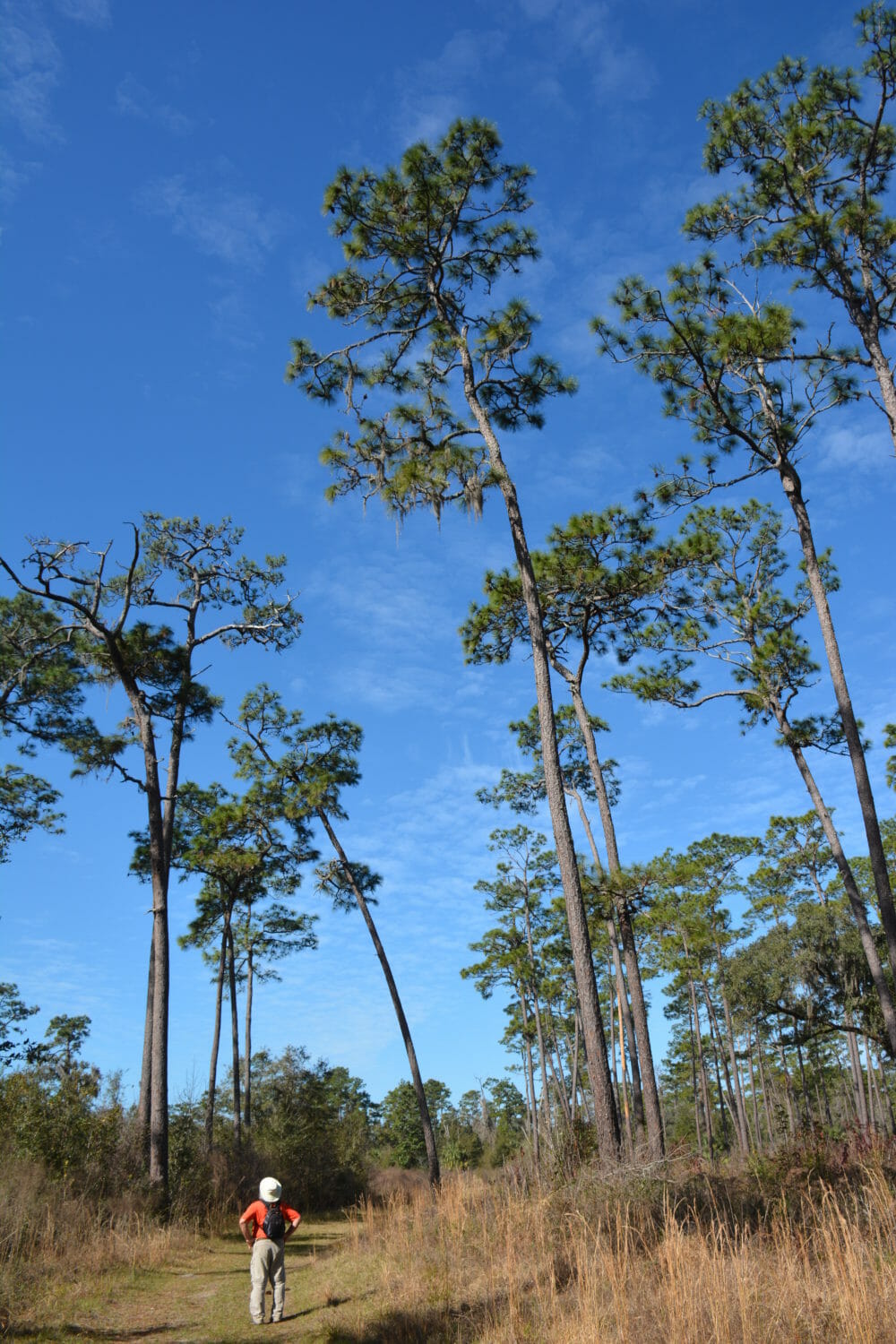 Home to Withlacoochee State Forest, Brooksville is the county seat of Hernando County and the heart of Florida's Adventure Coast. With a growing network of bike paths and plenty of trails, it's a great destination for outdoor recreation.