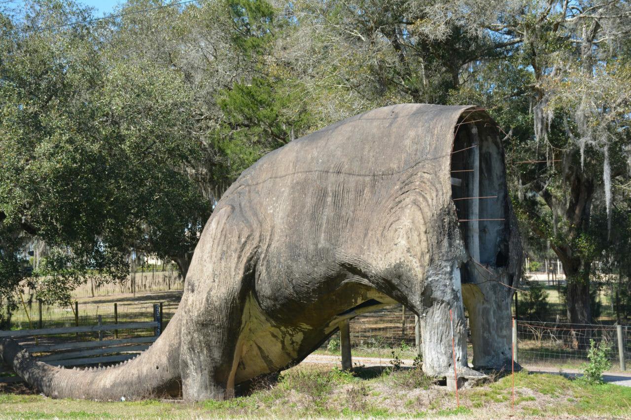 Dino butt Nobleton