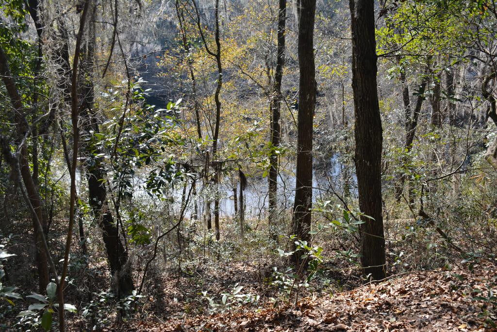 Florida Trail Suwannee