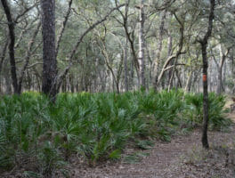 Florida Trail, Croom Hiking Trail