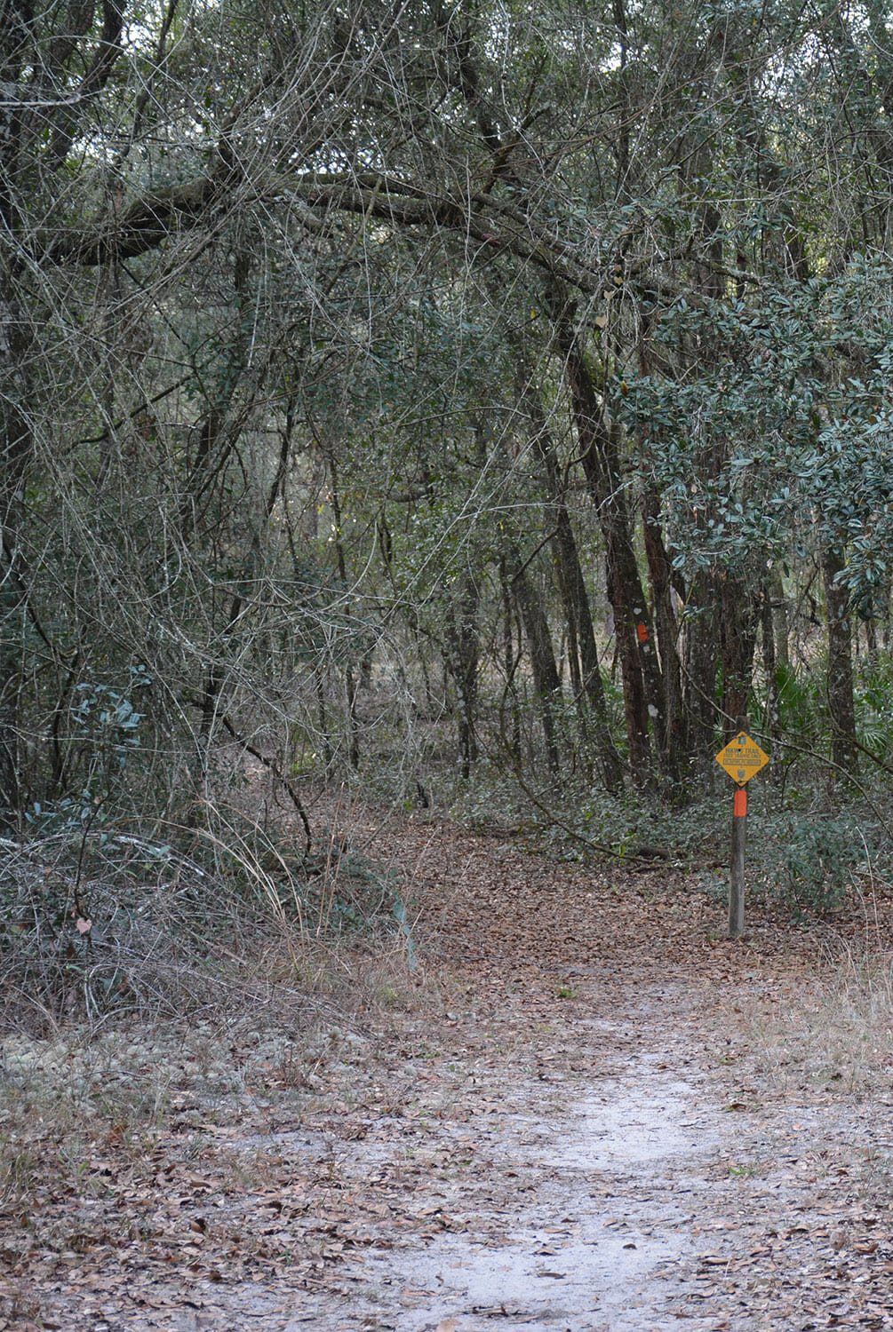 With three stacked loops containing 24.9 miles of marked footpaths, the Croom Hiking Trail is one of the oldest and driest loop hike destinations for backpackers on the Florida Trail.