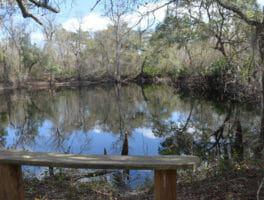 Croom River Trail Loop