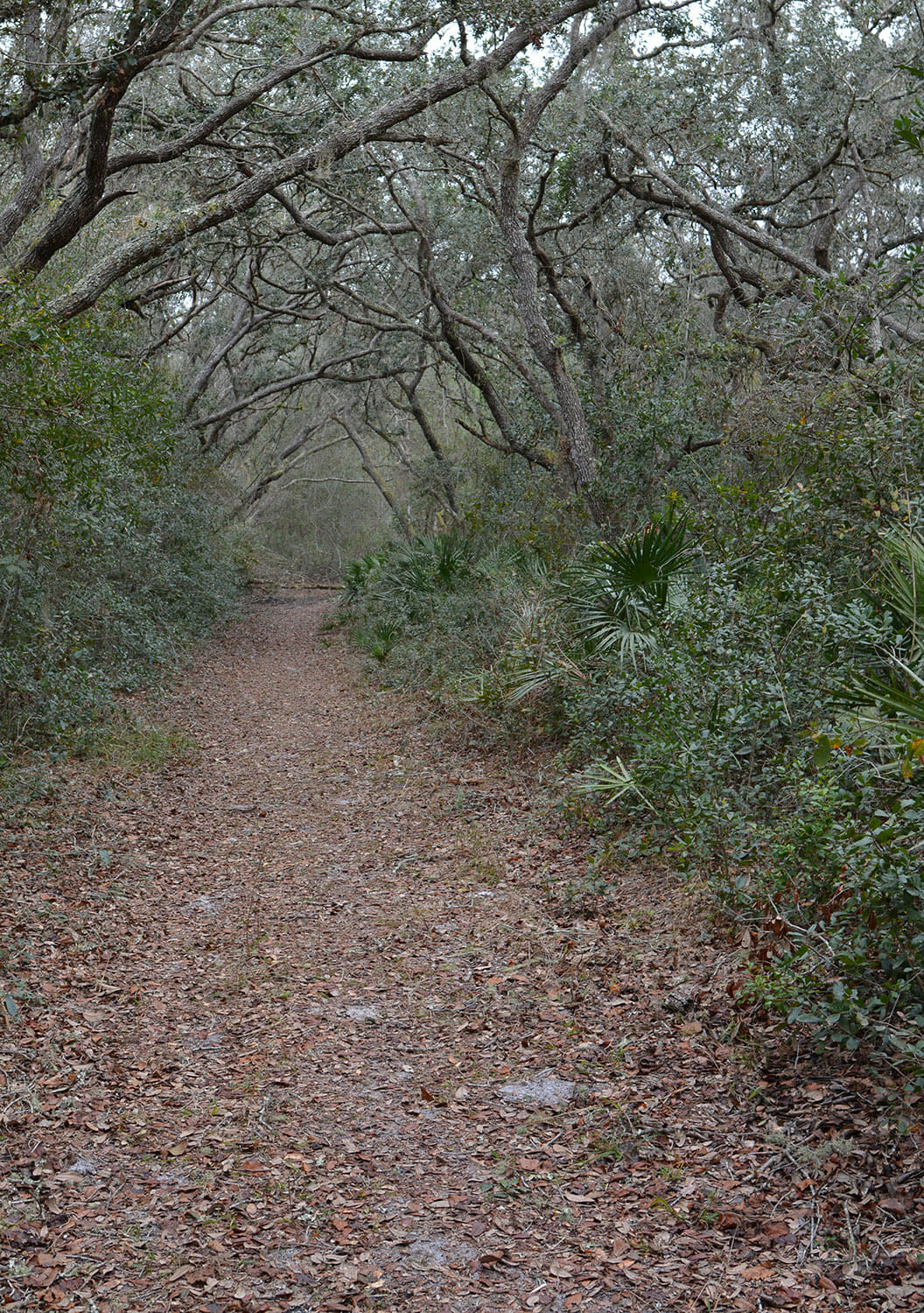 Using the Florida Trail and the Blue Loop Trail, hikers can explore a picturesque corner of Withlacoochee State Forest in Ridge Manor along a 3.9-mile loop.