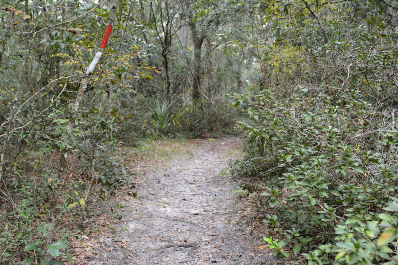 Ravine Gardens Azalea Trail