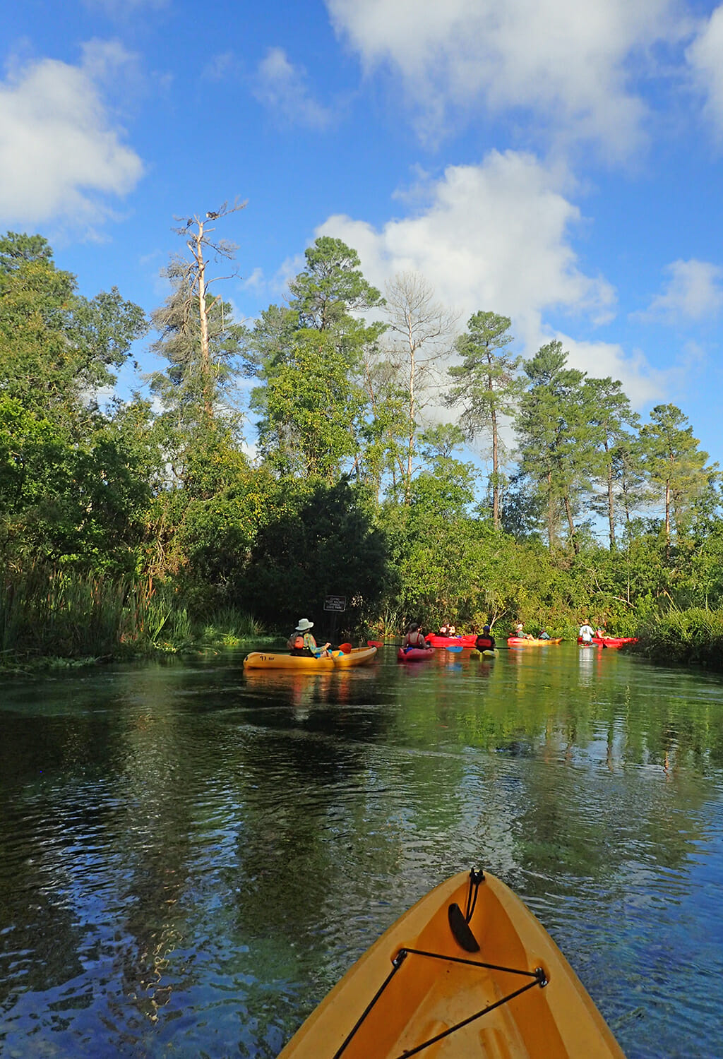 One of Florida's most beautiful paddling trips, the Weeki Wachee River rises from first magnitude Weeki Wachee Springs and winds through lush floodplain forests as it is fed by hundreds of smaller springs along this 5.5-mile paddling run.