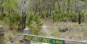 Wild Turkey Trace