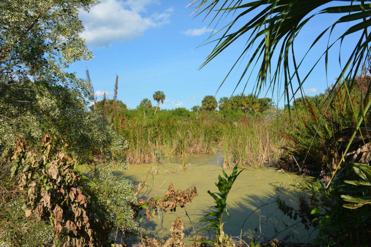 Sams House Garnet Trail marsh