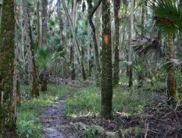 Florida Trail, Orlando