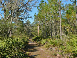 Brooker Creek Preserve