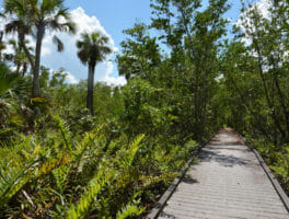 Barrier Island Sanctuary