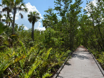 Barrier Island Trail