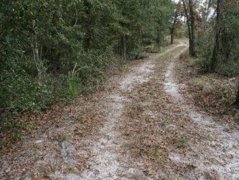 Murphy Creek Trail