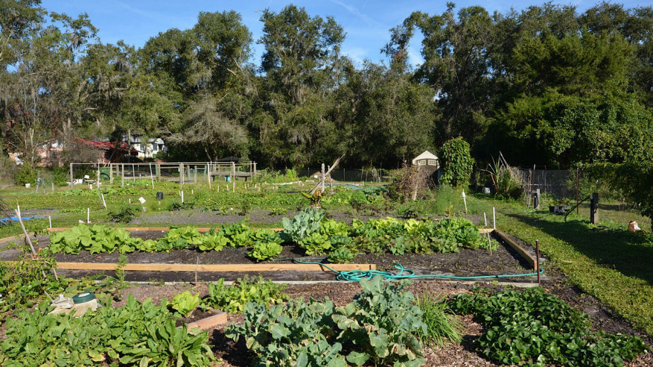 Community garden at Palatka Water Works