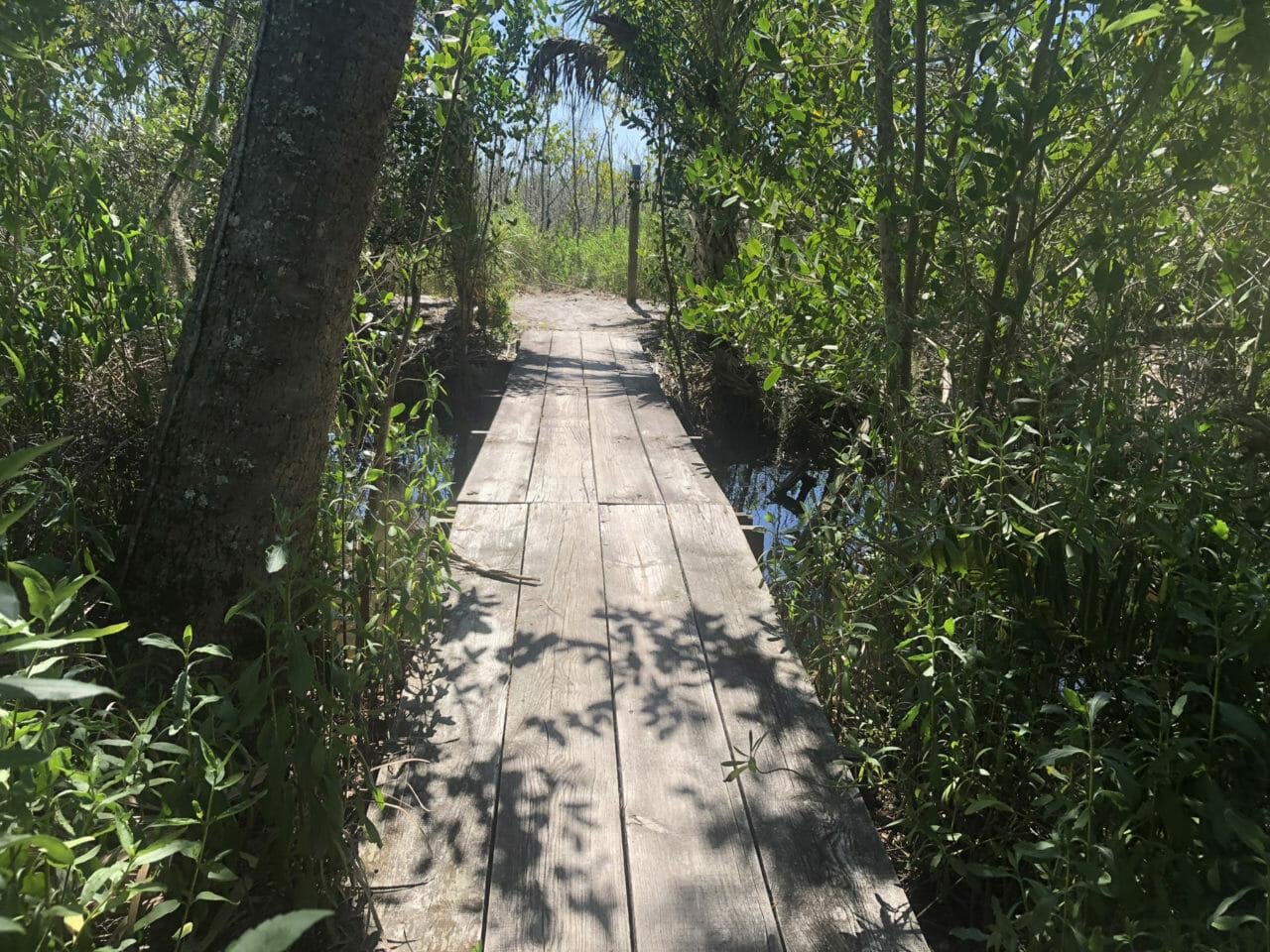 Sams House mangroves