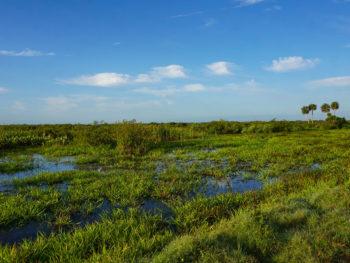 Florida Trail Kissimmee