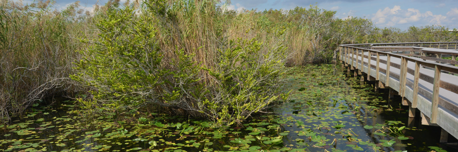 Everglades Anhinga Trail