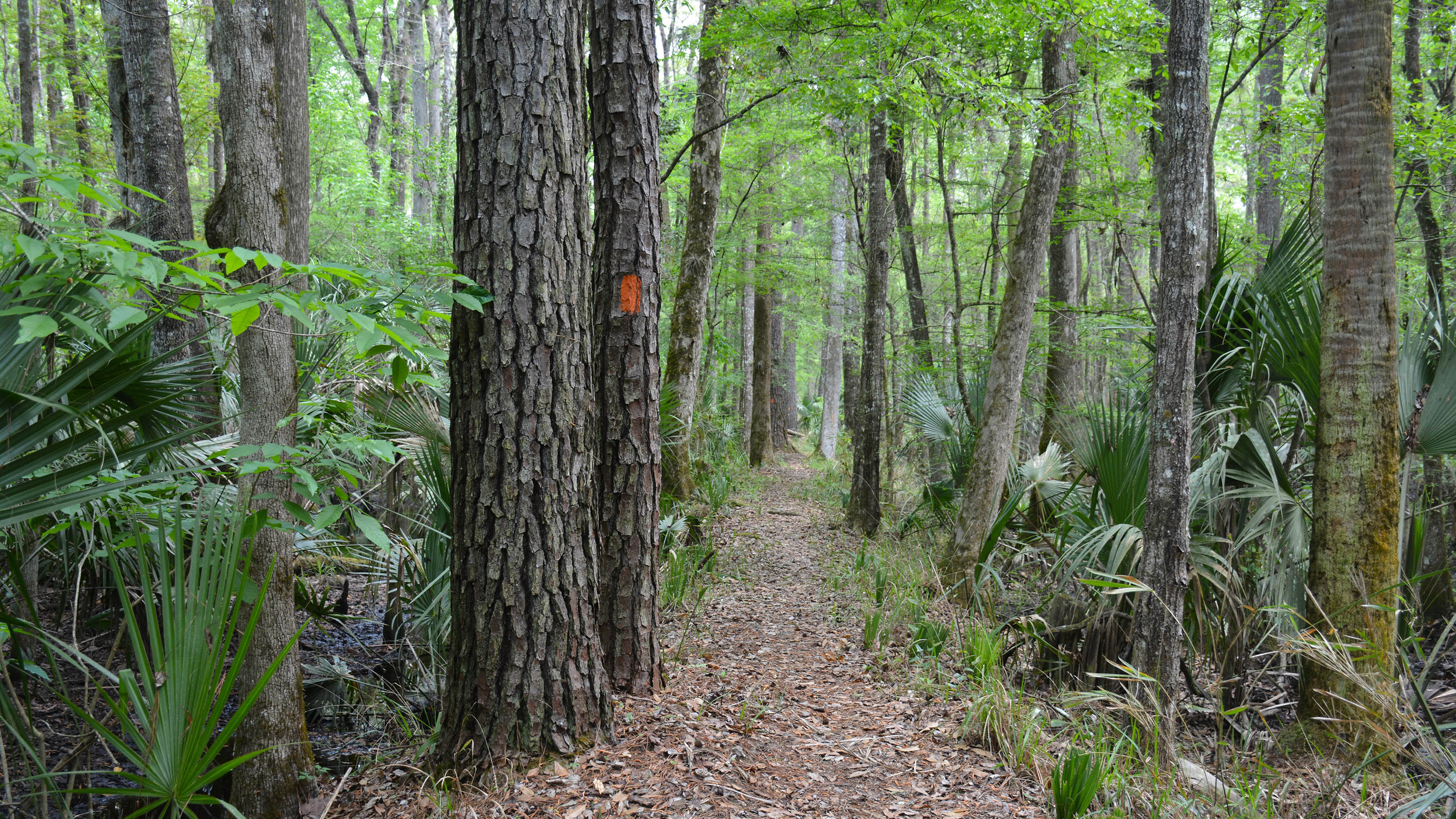 Florida Trail at Rice Creek