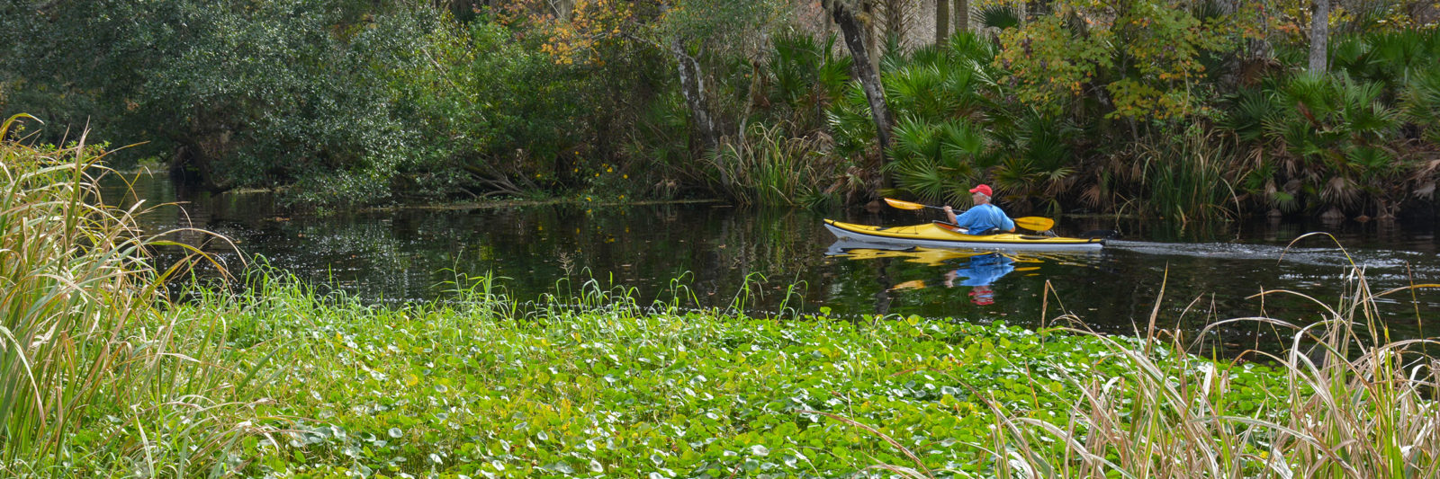 Haw Creek Preserve State Park paddler