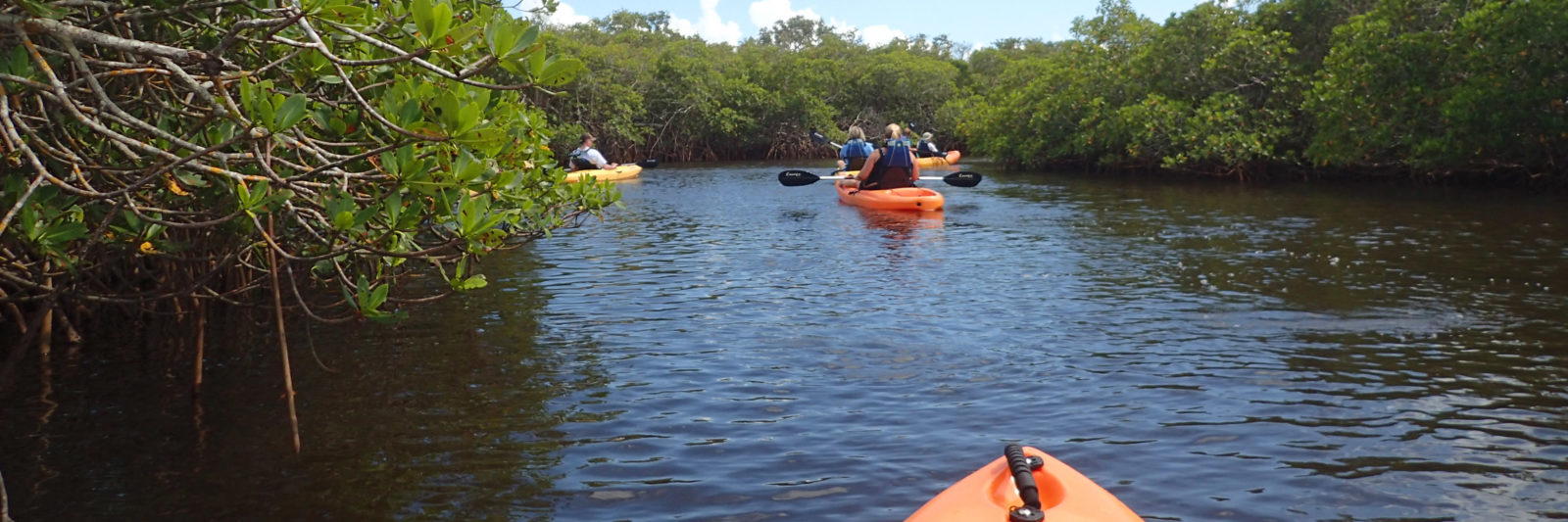 Kayaking Cape Coral
