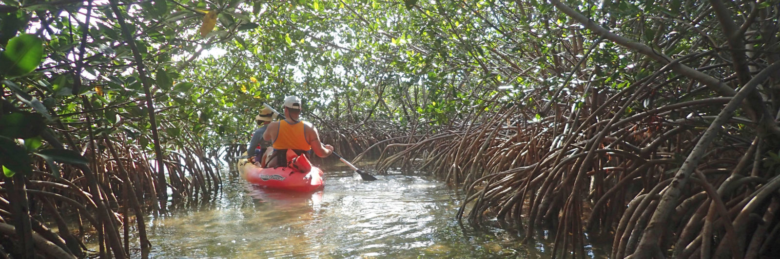 Paddling a mangrove tunnel