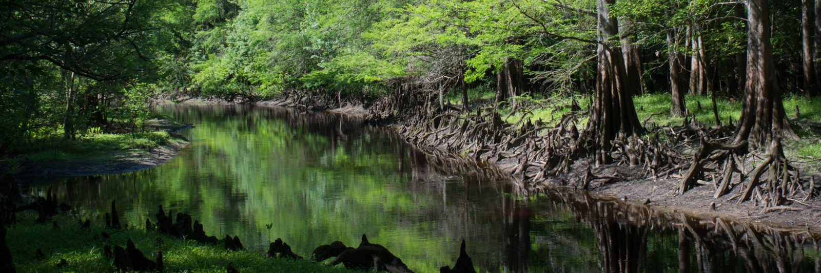 Withlacoochee River at Richloam