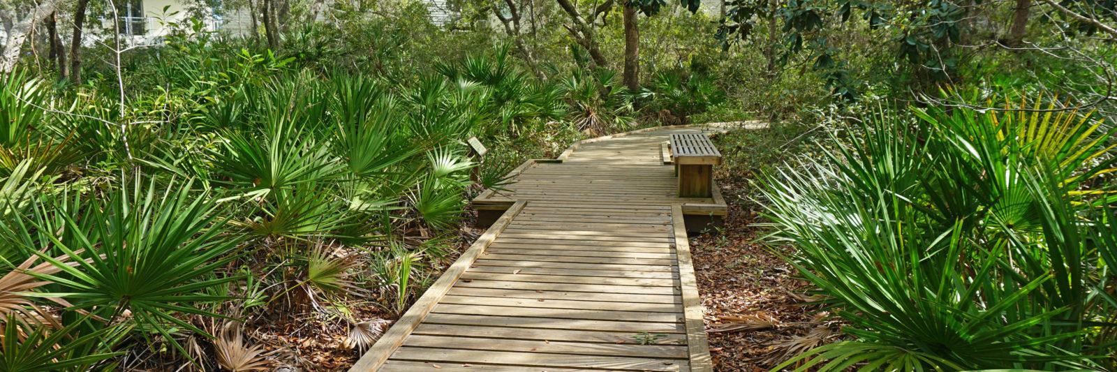 nature trail Apalachicola NERR