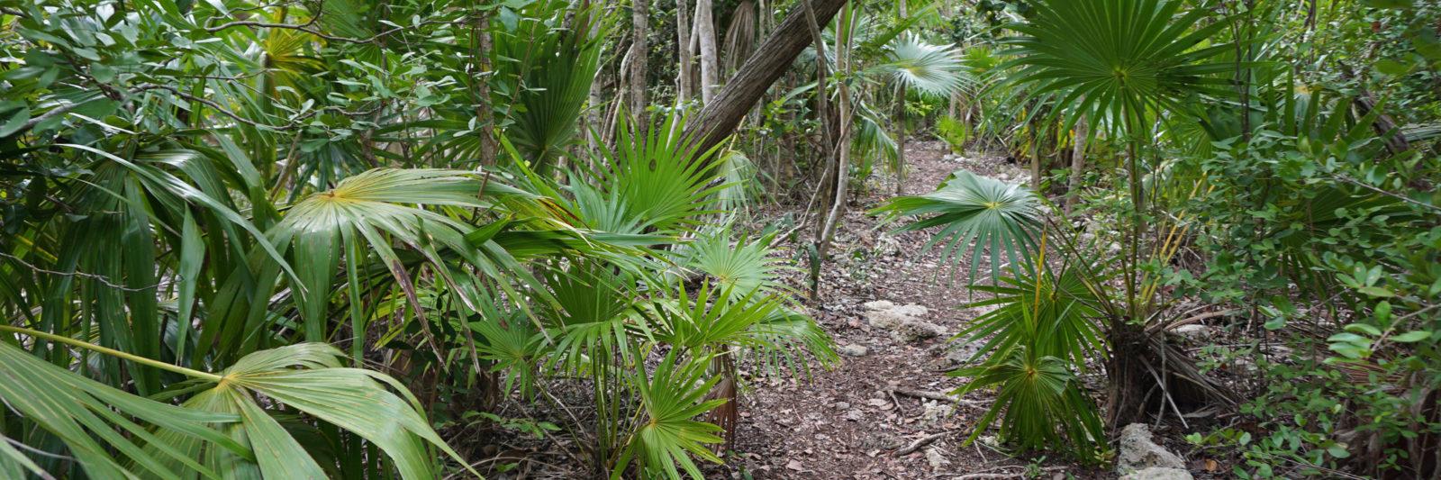 tropical forest Crane Point Hammock