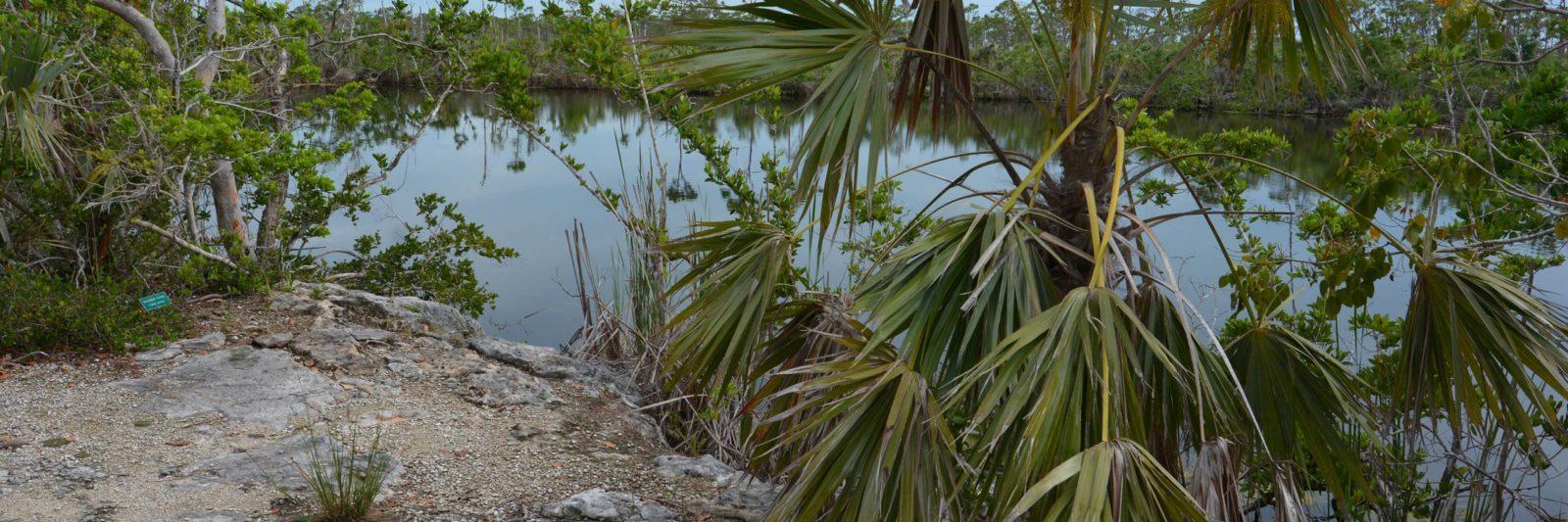 Blue Hole Big Pine Key